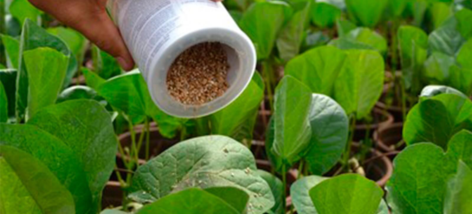 promip manejo integrado de pragas controle biologico engenheiros agronomos final (1)