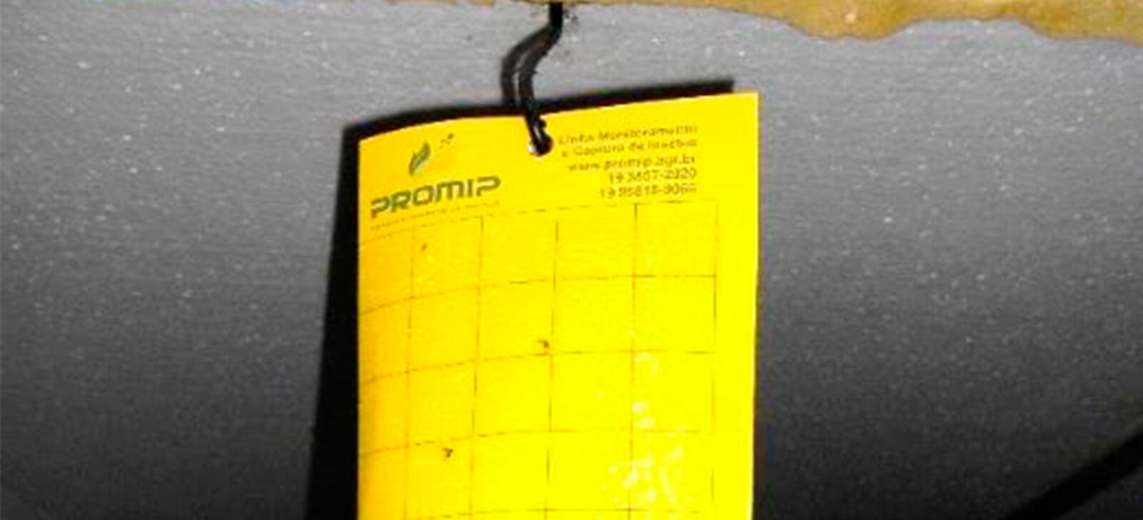 promip manejo integrado de pragas stratiomip controle fungus gnats em cogumelos armadilha amarela