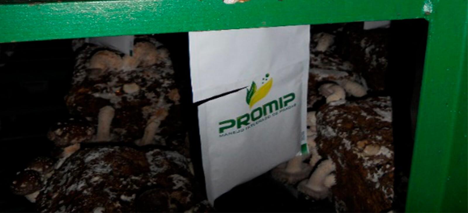 promip manejo integrado de pragas stratiomip controle fungus gnats em cogumelos liberacao stratio