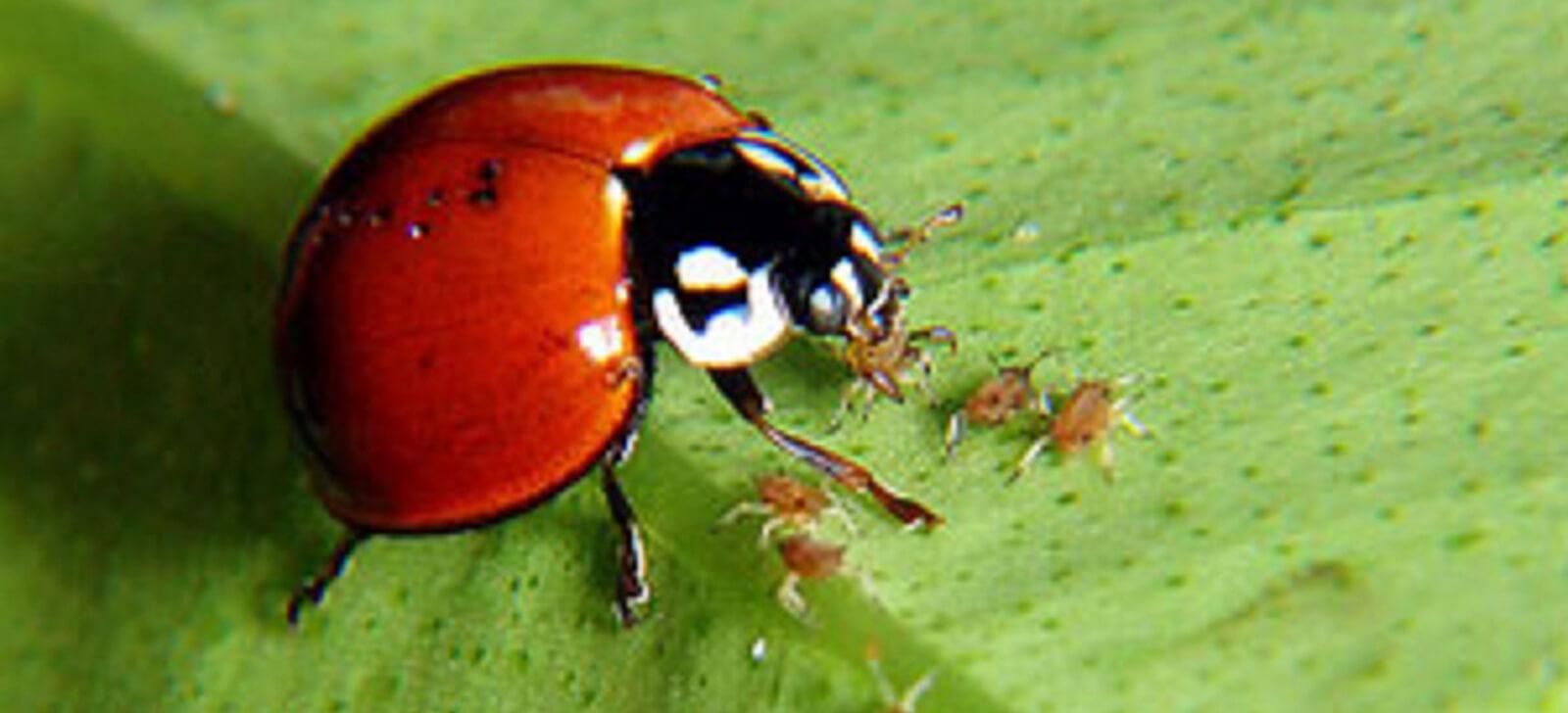 promip manejo integrado de pragas controle insetos e acaros ajudam a agricultura final (3)
