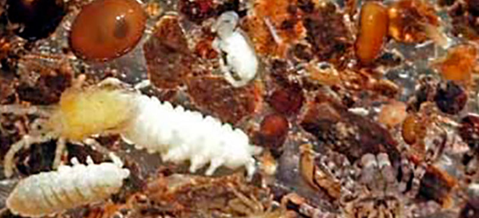 promip manejo integrado de pragas controle biologico acarofauna