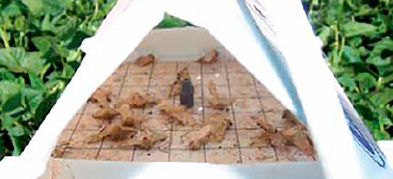 promip manejo integrado de pragas controle biologico armadilha mariposas