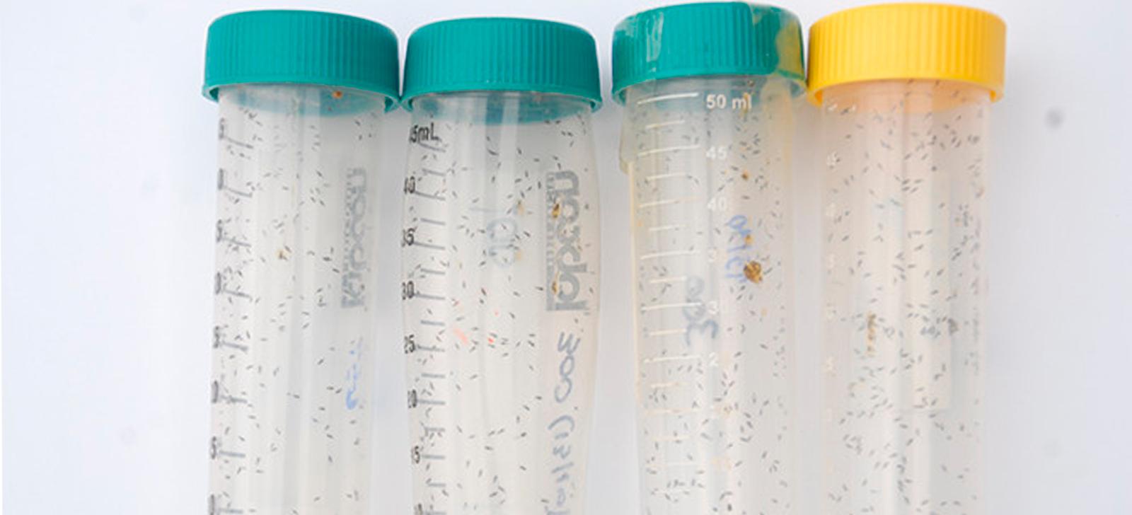 promip manejo integrado de pragas controle biologico lapar cooperativas doencas laranjas biologico (3)