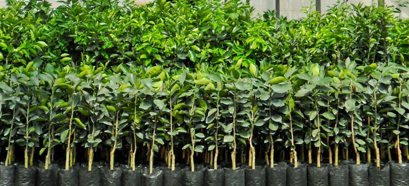 Encontro técnico discute controle biológico em viveiro de produção de mudas de citros