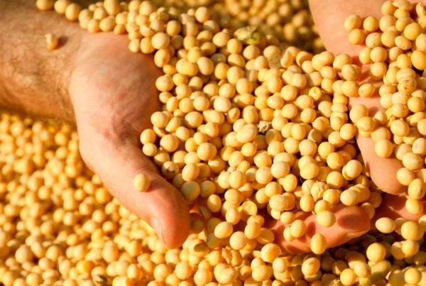 manejo integrado de pragas controle biologico encontro produtores de graos discute controle biologico manejo de pragascapa soja final