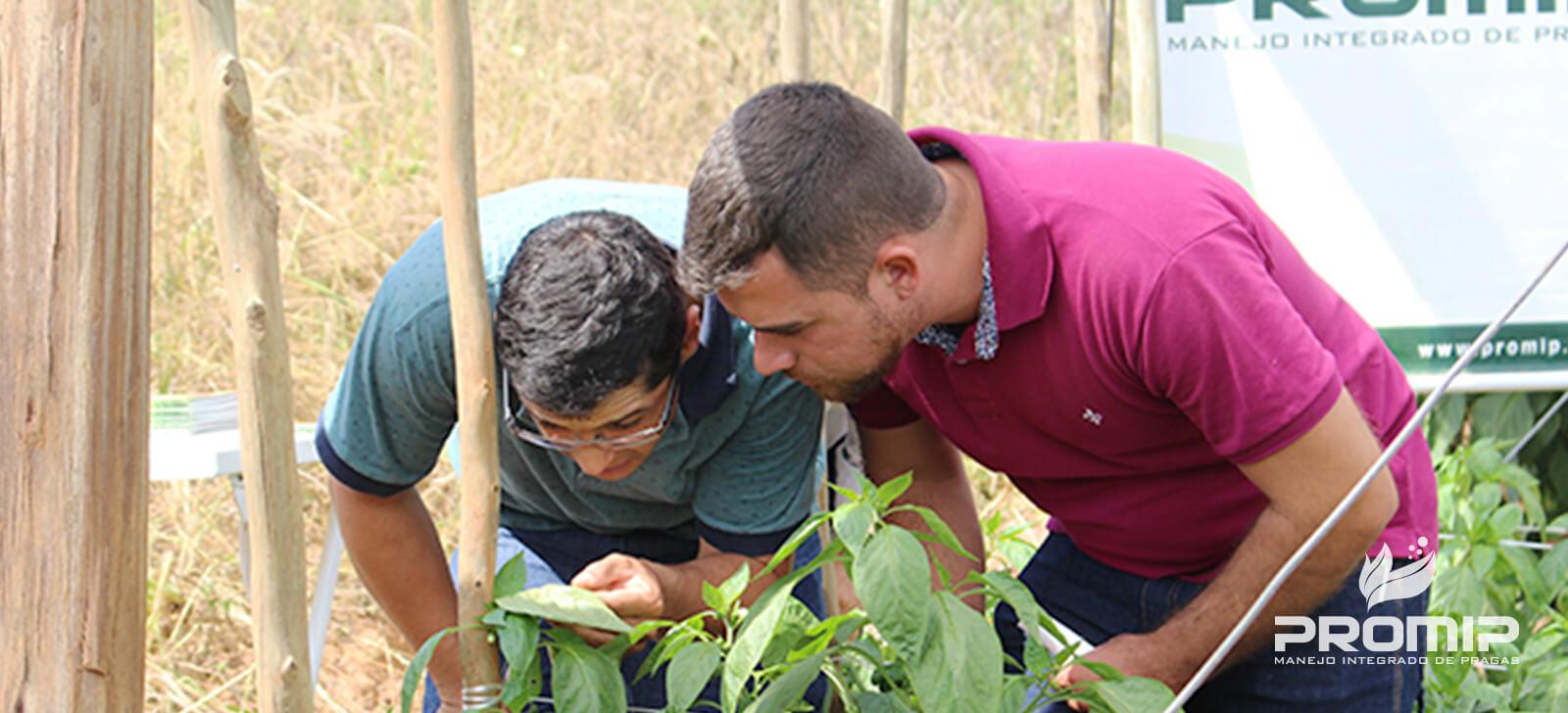 manejo integrado de pragas controle biologico dia de campo desmonstra aos agricultores beneficios controle biologico aplicado