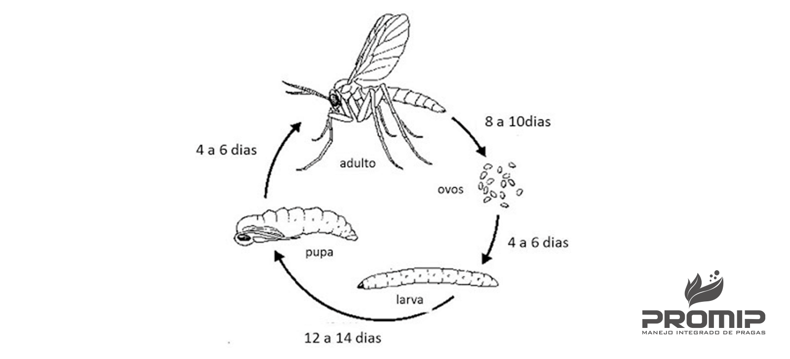 promip manejo integrado de pragas controle biologico fungus gnats