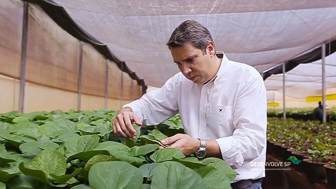 promip manejo integrado de pragas controle biologico mundo verde