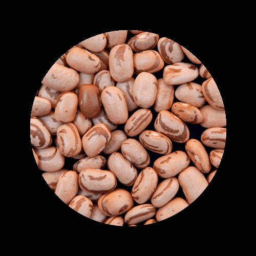 promip controle biologico manejo integrado de pragas icone cultura feijão