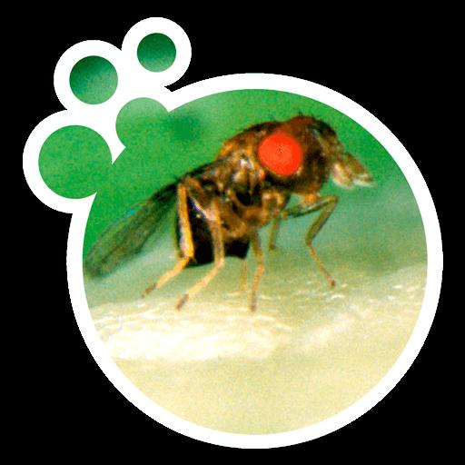 promip controle biologico manejo integrado de pragas produto bolinha acaro predador trichomip g