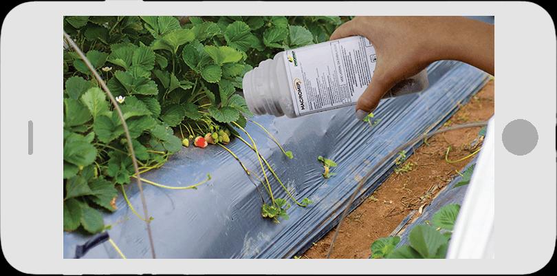 promip controle biologico manejo integrado de pragas thumbnail video macromip como usar