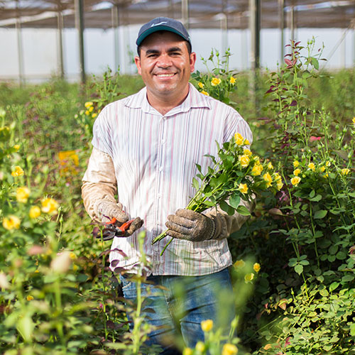 promip depoimento produtos mario henrique da silva fazenda rozental producao de rosas mogi mirim sp