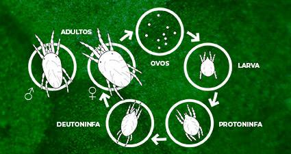promip manejo integrado pragas controle biologico mip experience artigo acaros tetraniquideos ciclo mobile