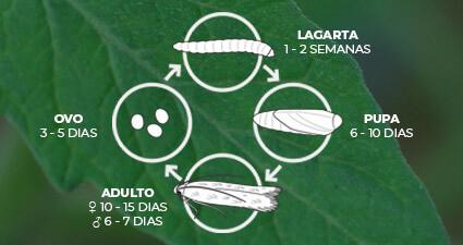 promip manejo integrado pragas controle biologico mip experience artigo tuta absoluta ciclo mobile