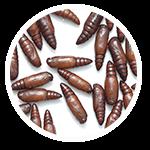 promip manejo integrado pragas controle biologico serviços insecta bolinha 2 mobile