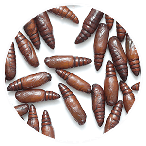 promip manejo integrado pragas controle biologico serviços insecta bolinha 2