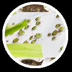 promip manejo integrado pragas controle biologico serviços insecta bolinha 3 mobile