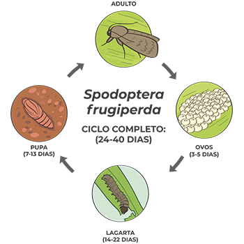 promip manejo integrado pragas controle biologico mip experience artigo Spodoptera frugiperda ciclo mobile