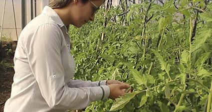promip manejo integrado pragas controle biologico mip experience artigo tripes controle cultural mobile