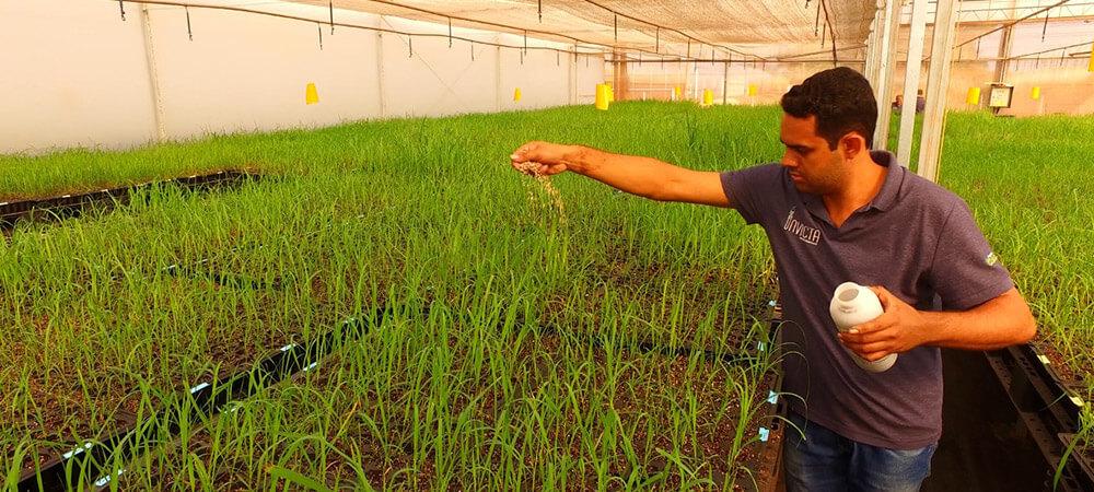 promip manejo integrado pragas controle biologico mip experience artigo fungus gnats controle biologico