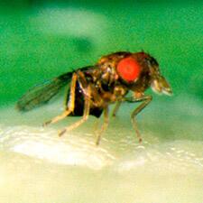 promip manejo integrado pragas controle biologico mip experience artigo lagarta diatraea saccharalis mip trichomip p mobile final