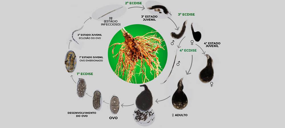 promip manejo integrado pragas controle biologico mip experience artigo nematoides ciclo