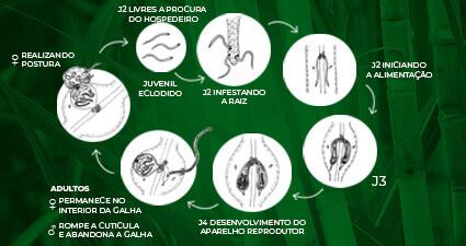 promip manejo integrado pragas controle biologico mip experience nematoides ciclo mobile