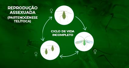 promip manejo integrado pragas controle biologico mip experience afídeos ciclo incompleto mobile final