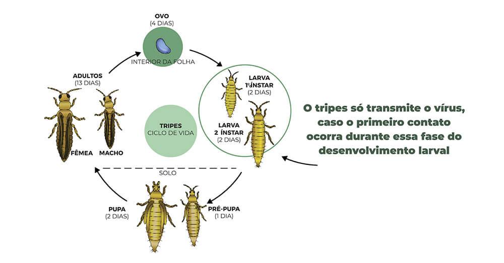 promip manejo integrado pragas controle biologico mip experience artigo vira cabeca ciclo