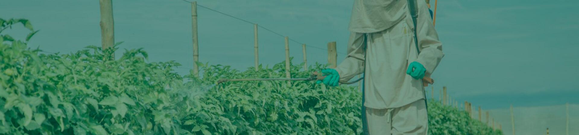 O uso de agroquímicos seletivos é a chave para o sucesso do MIP