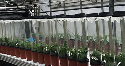 promip manejo integrado pragas controle biologico mip experience artigo utilizacao fungos experimento feijao mobile