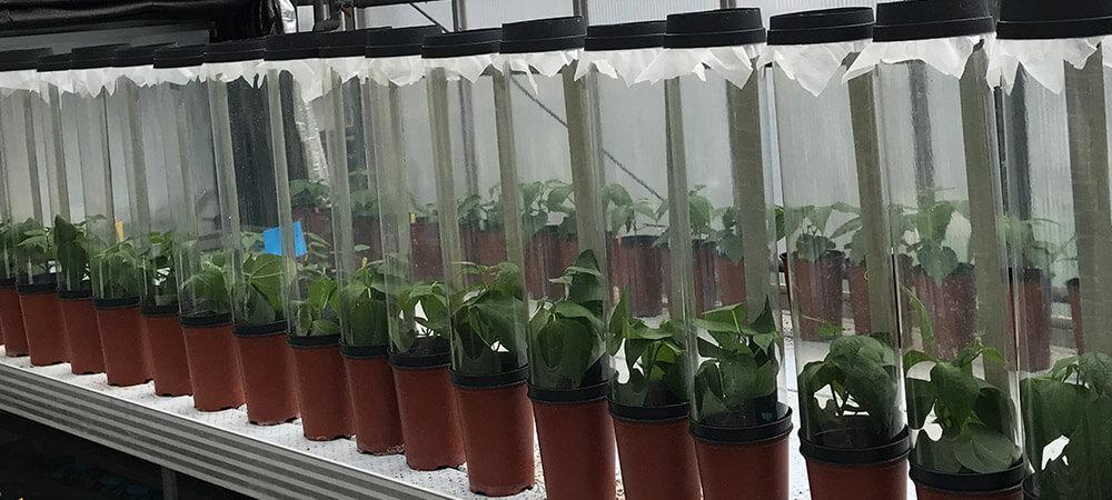 promip manejo integrado pragas controle biologico mip experience artigo utilizacao fungos experimento feijao