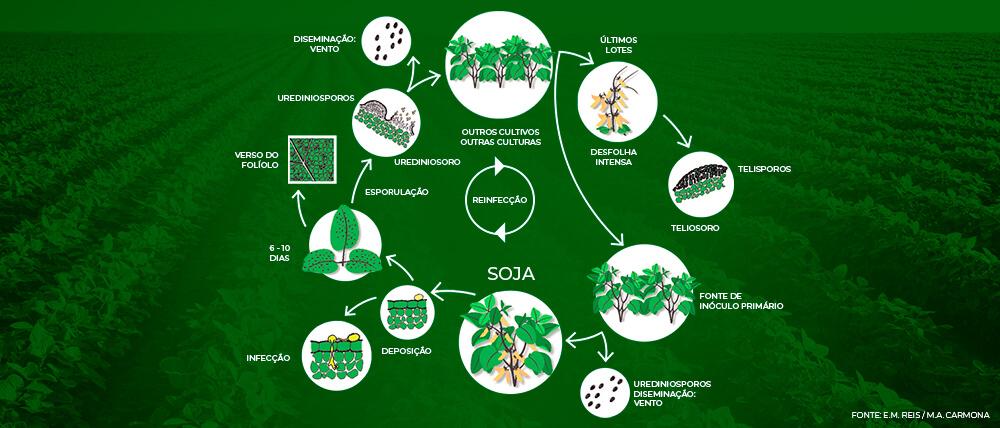 promip manejo integrado pragas controle biologico mip experience ferrugem asiatica soja ciclo