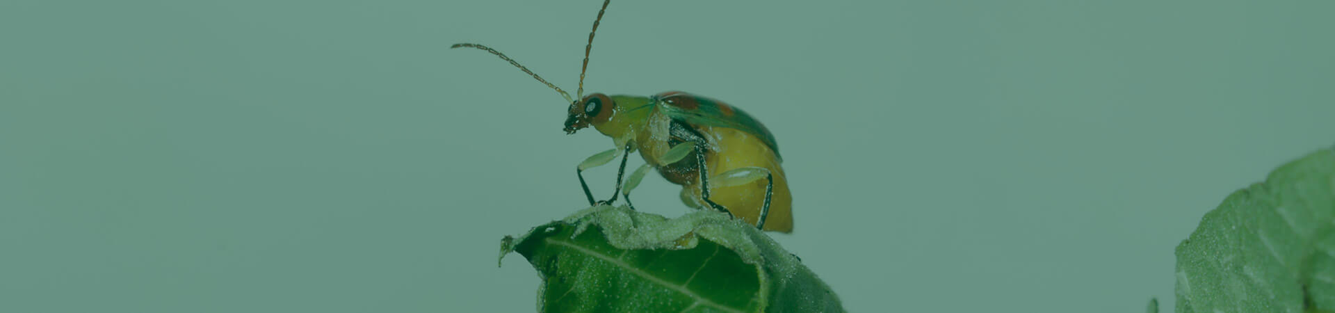 Pensando em insetos fora da caixa: em direção da agricultura do futuro