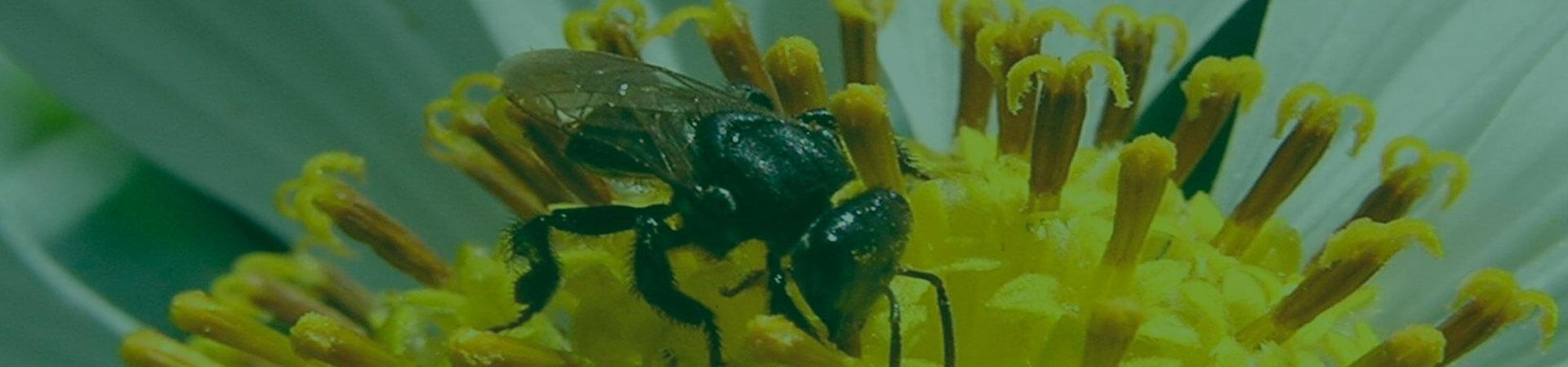 Controle biológico contribui para a preservação dos polinizadores em campo