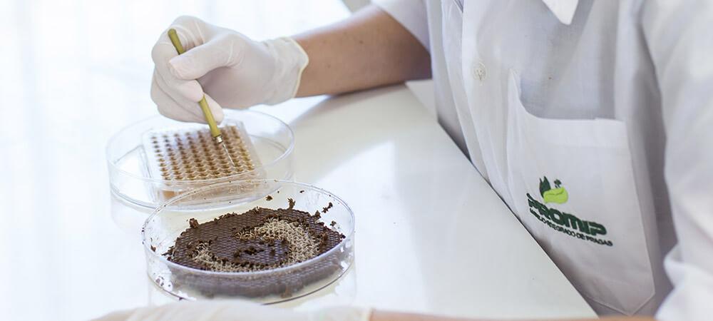 promip manejo integrado de pragas controle biologico preservacao polinizadores mip