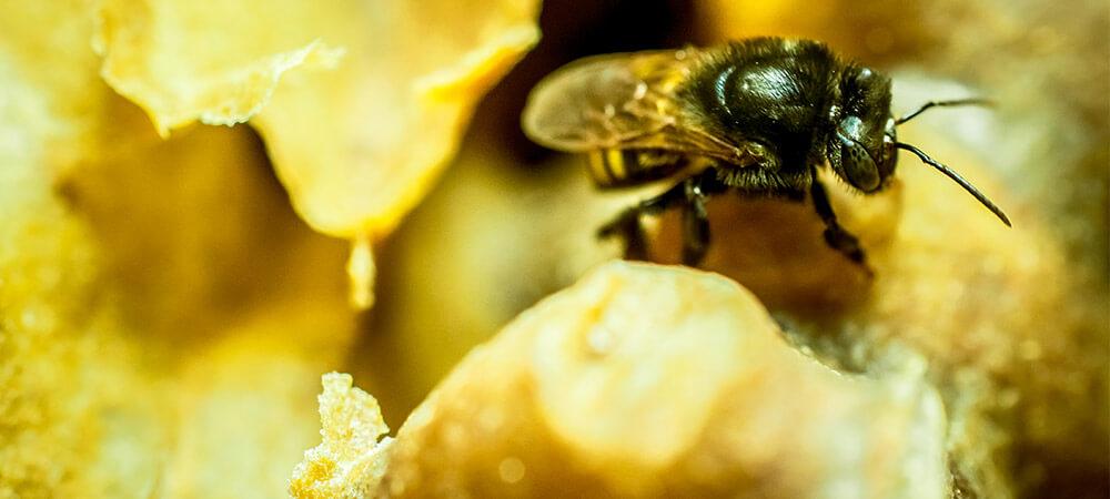 promip manejo integrado de pragas controle biologico preservacao polinizadores sumico abelhas