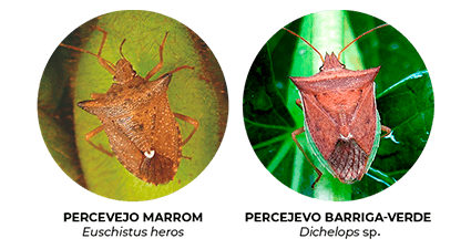promip manejo integrado pragas controle biologico mip experience percevejo soja especies mobile atualizado