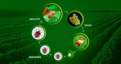 promip manejo integrado pragas controle biologico mip experience percevejo marrom ciclo mobile