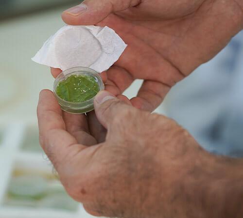 promip manejo integrado pragas controle biologico mip experience resistência mosca branca ensaio efeito ovicida