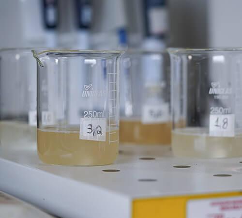 promip manejo integrado pragas controle biologico mip experience resistência mosca branca estudos resistencia (2)