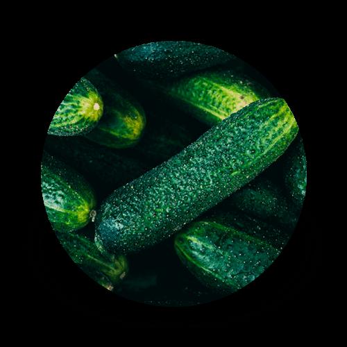 promip controle biologico manejo integrado de pragas amblymip culturas pepino