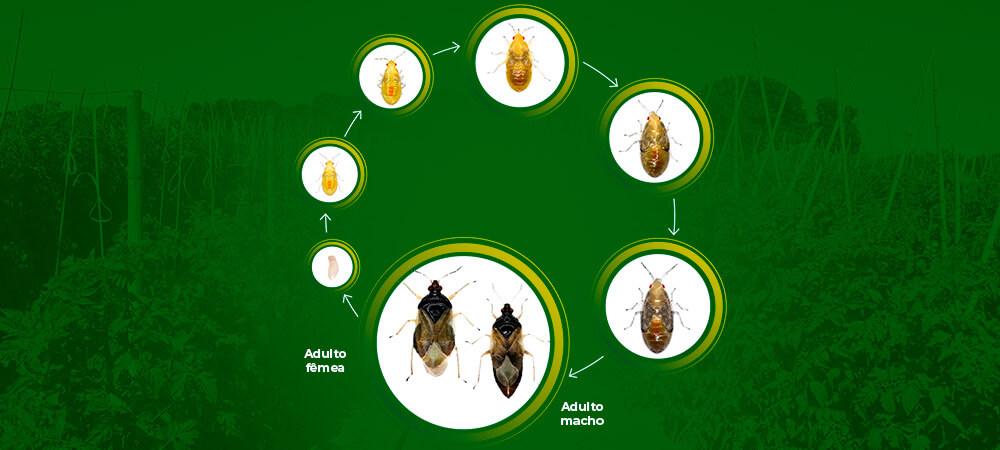 promip manejo integrado pragas controle biologico mip experience manejo integrado orus ciclo
