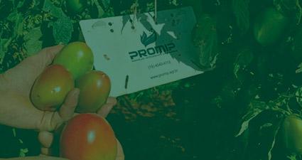 promip manejo integrado pragas controle biologico mip experience monitoramento pragas doenças tomate header mobile
