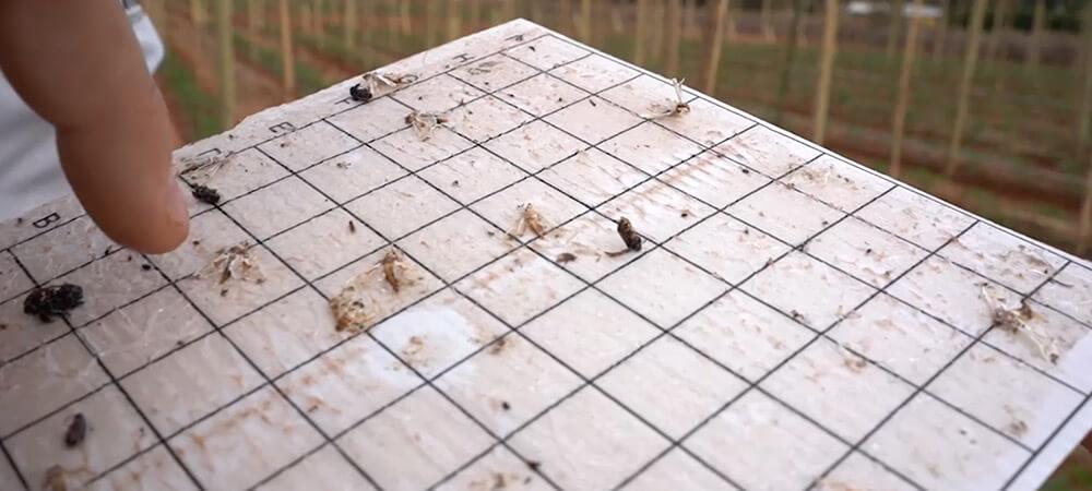 promip manejo integrado pragas controle biologico mip experience monitoramento pragas doenças tomate monitoramento
