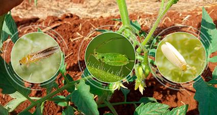 promip manejo integrado pragas controle biologico mip experience monitoramento pragas doenças tomate pragas mobile