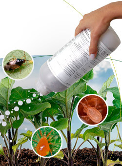 promip manejo integrado pragas controle biologico mip experience monitoramento pragas entendendo bioprodutos parte 1 capa