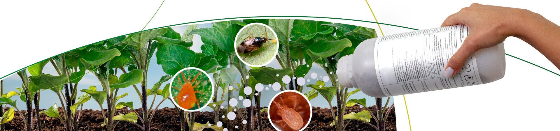 Entendendo os Bioprodutos (parte 01)