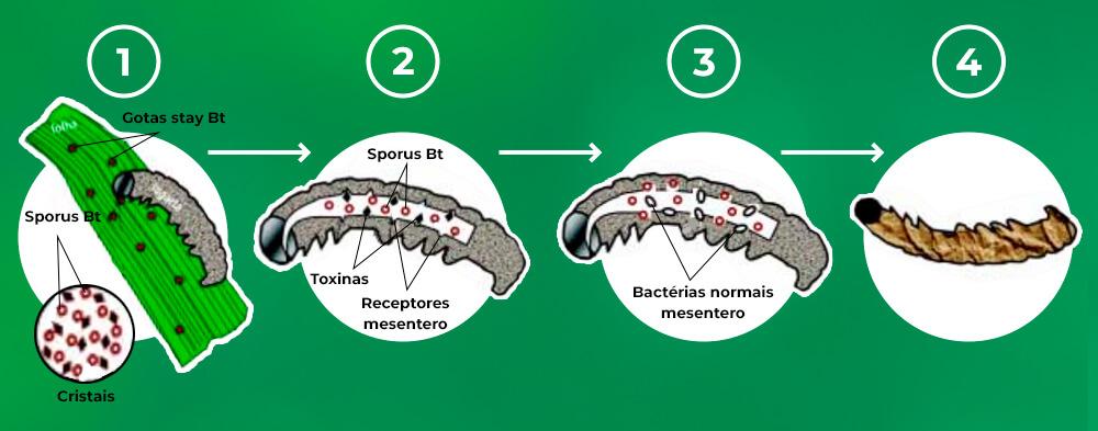 promip manejo integrado pragas controle biologico mip experience monitoramento pragas entendendo bioprodutos parte 2 contaminacao bt