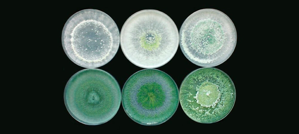promip manejo integrado pragas controle biologico mip experience monitoramento pragas entendendo bioprodutos parte 2 fungos beneficos